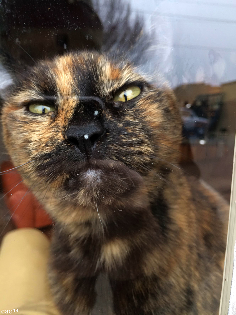 Cat in a Store Window