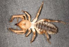 sunspider - courtesy csu